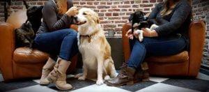 Le Waf 1er bar a chiens d'Europe
