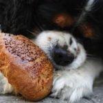 mon chien vole de la nourriture