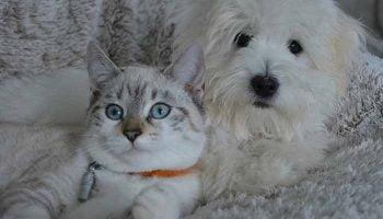 cohabitation-chien-chat