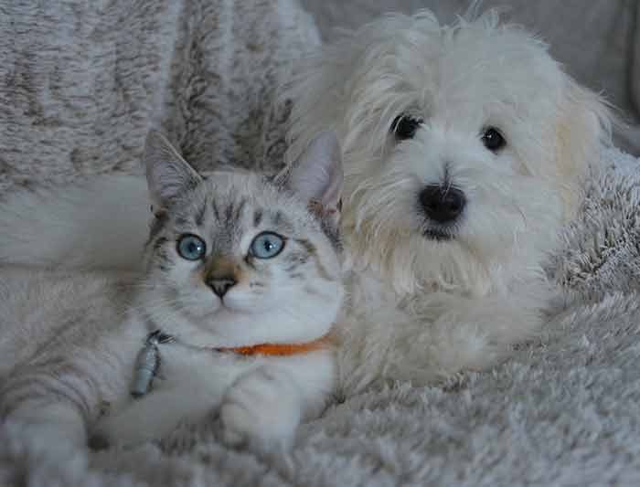 sexe rencontre chaton chat adulte