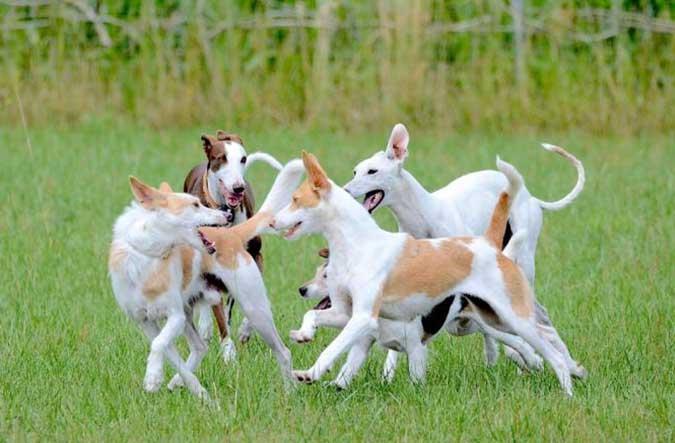 Arrivée d'un nouveau chien : réussir les présentations