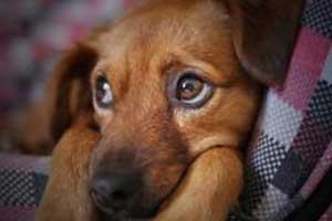 quand souscrire une assurance pour son chien