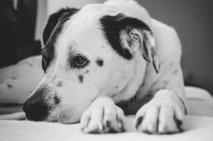 le remboursement des mutuelles chiens