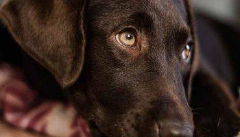 souscire à une assurance pour chien