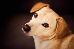 souscrire une mutuelle pour chien