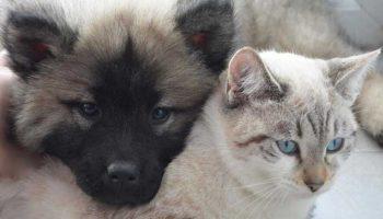 assurance pour plusieurs animaux