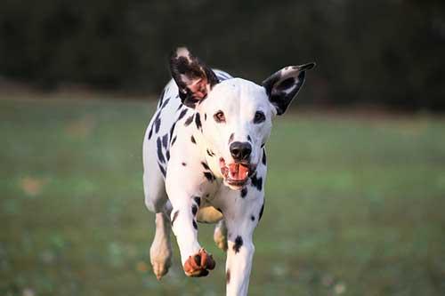 assurance chien à effet immédiat