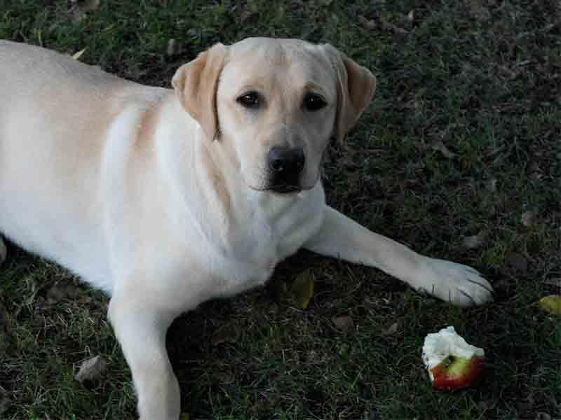 Fruit pour chien