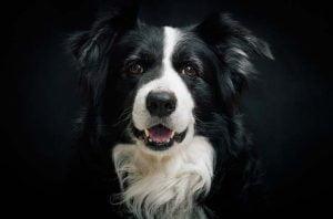 Un salon canin pour le bien-être du chien