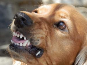 assurance morsure chien