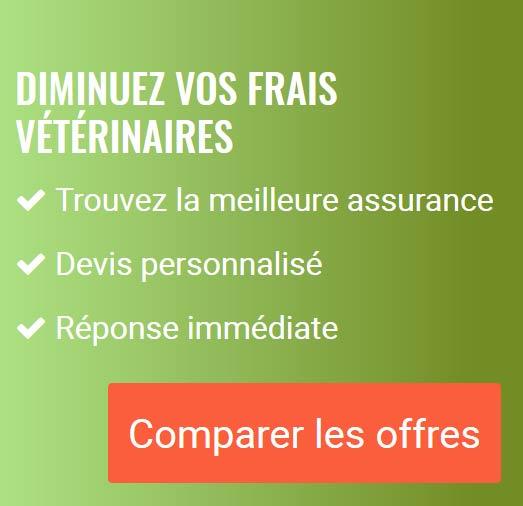Comparez les assurances chien