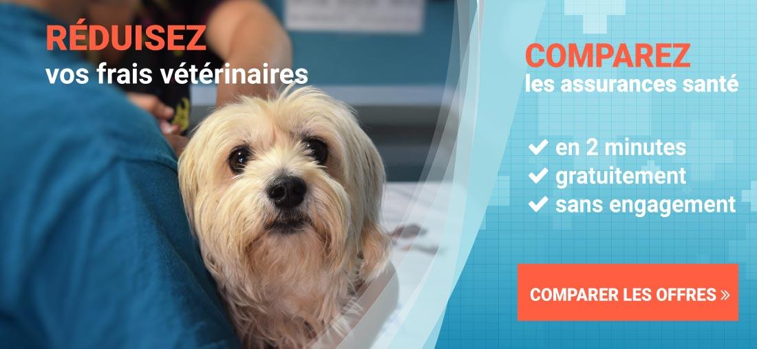 assurance chien comparatif. Black Bedroom Furniture Sets. Home Design Ideas