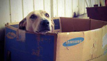 Mon chien a mangé du carton