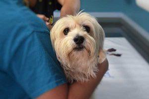 choisir un vétérinaire pour son chien