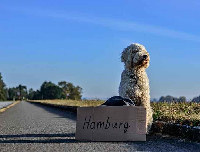 passeport pour chien voyager l 39 tranger avec son chien. Black Bedroom Furniture Sets. Home Design Ideas