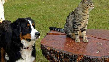 les trafis de la garde de chien