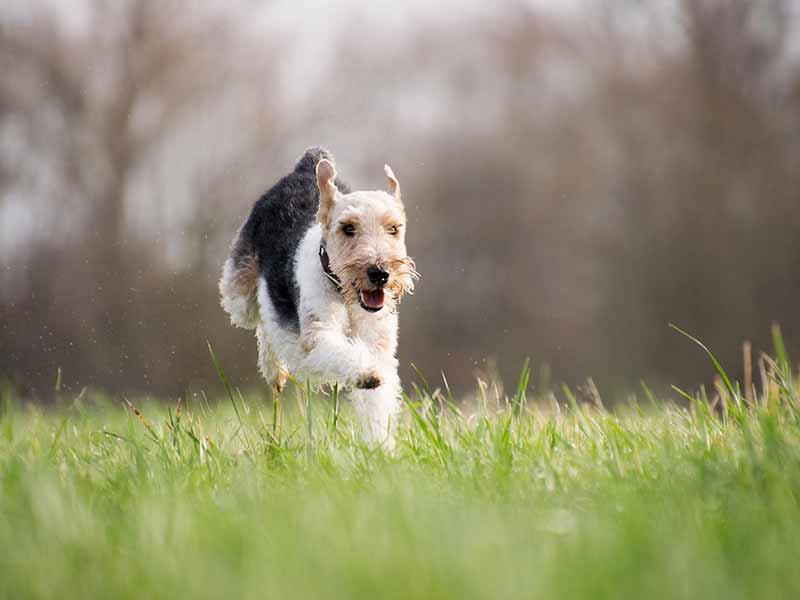 Les vitamines pour chien
