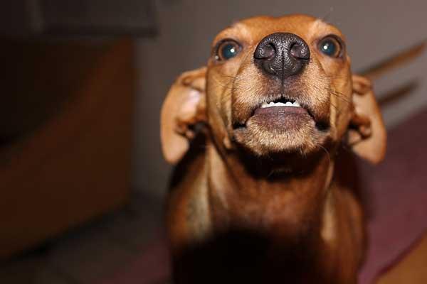 chien agressif avec les gens