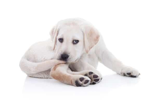 """Résultat de recherche d'images pour """"Mon chien se mord la queue"""""""