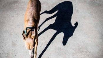 Un chien sur le bitume