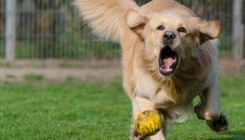 Un chien très excité